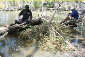 Hand removal of Hymenachne amplexicaulis (Olive hymenachne) from a lagoon at Chuulangun
